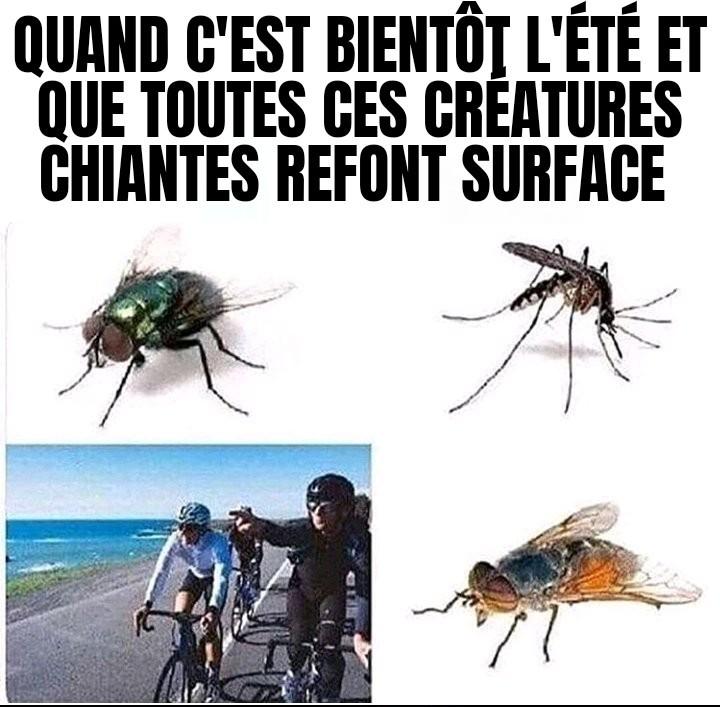 Ils sont chiants ces moustiques - meme
