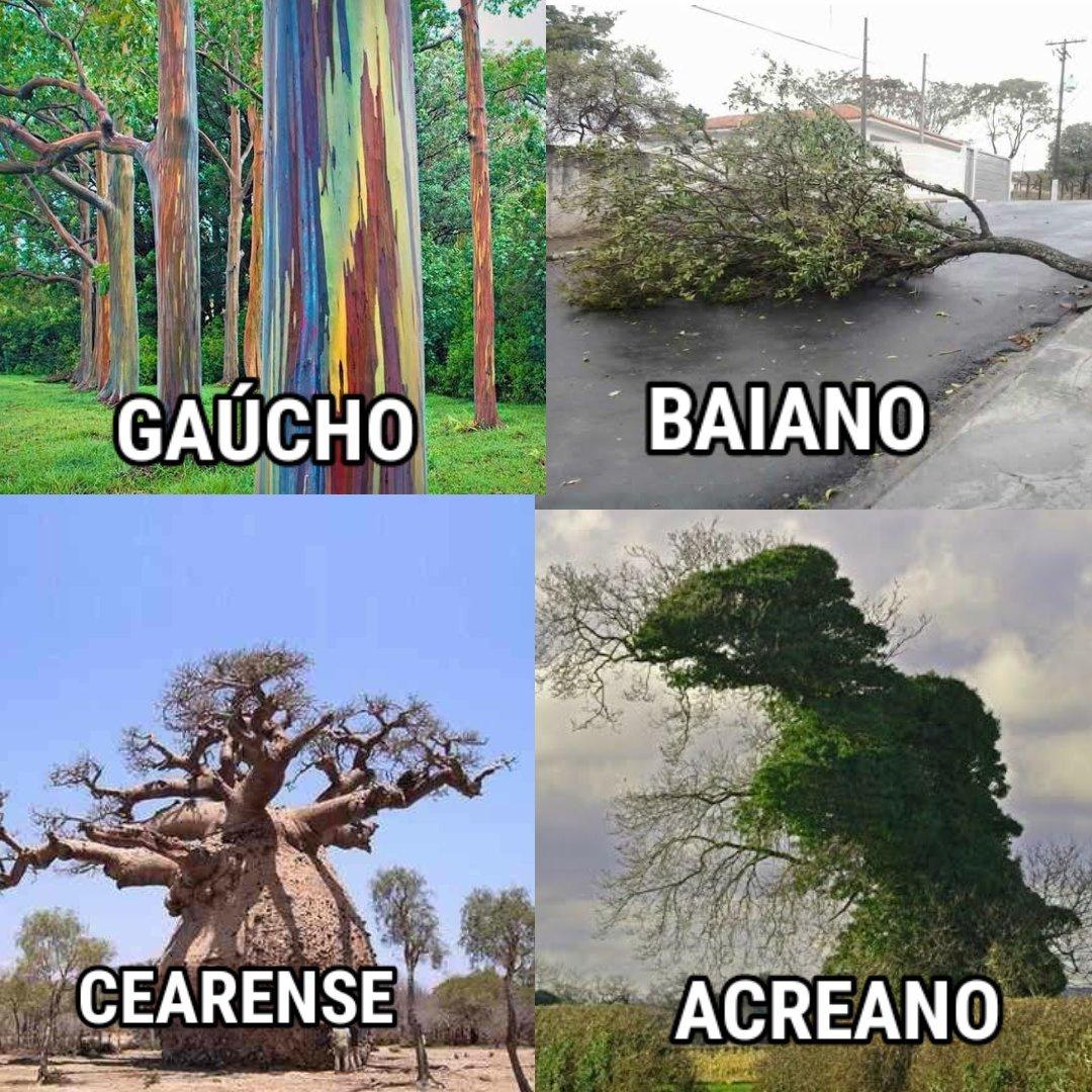 Arvores representando brasileiros - meme