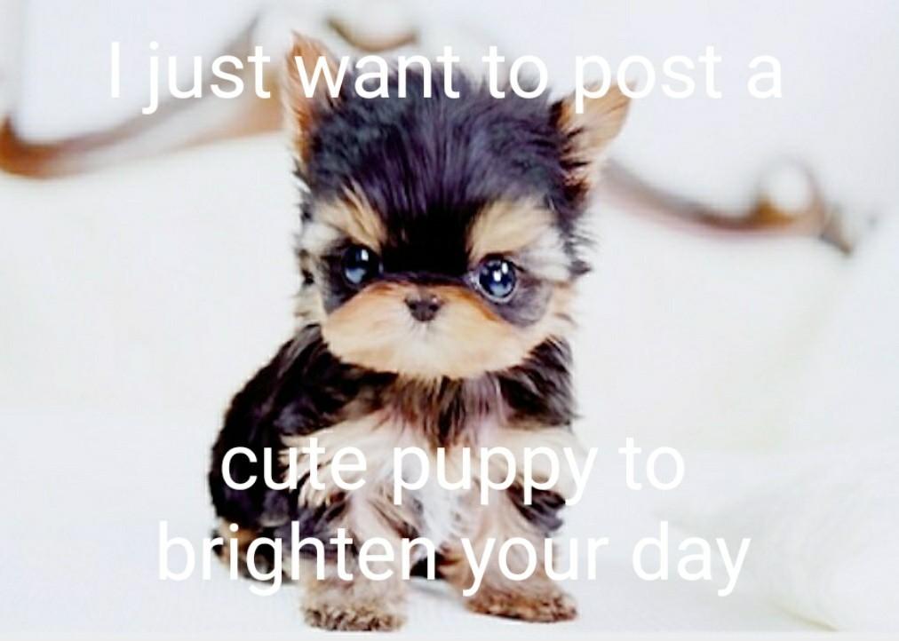 To make you smile - meme