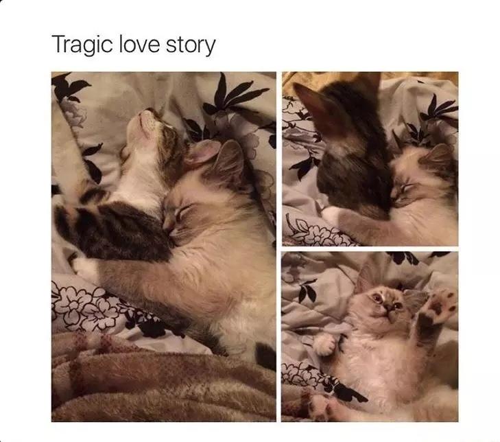 cats = life - meme