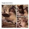 cats = life