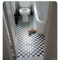 I just wanna pee!