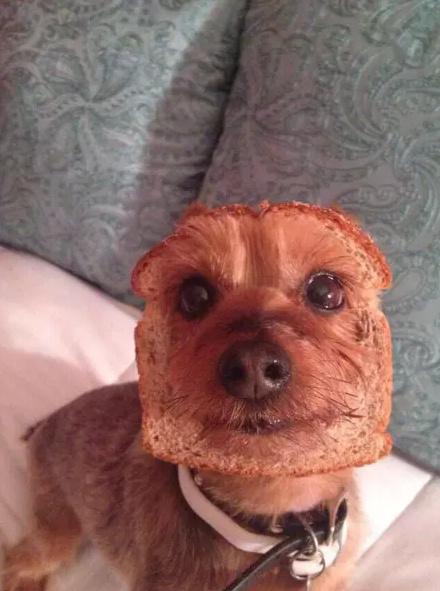 I feel bad for the doggo - meme