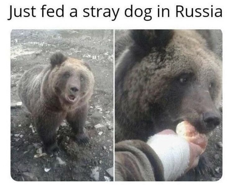 cool dog - meme