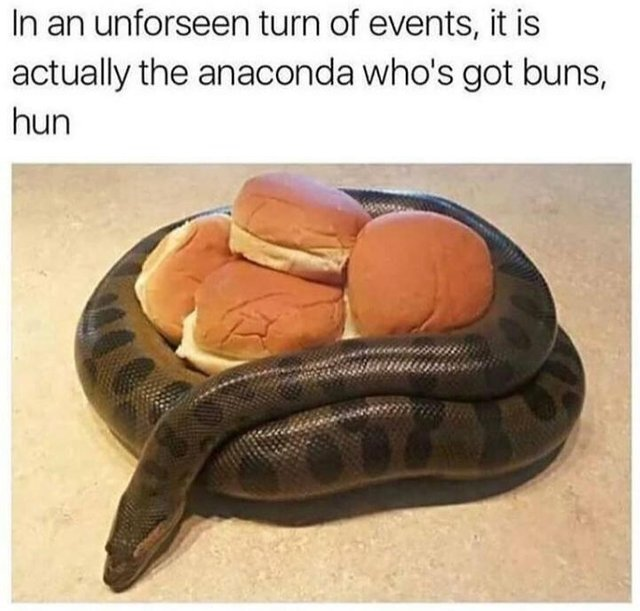 The anaconda got buns - meme