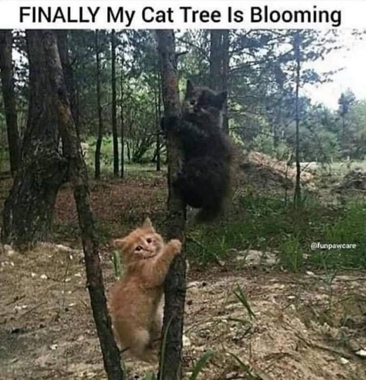 the puss tree - meme