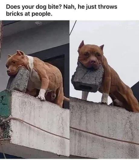seu cachorro morde? não ele só joga tijolos nas pessoas - meme