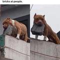 seu cachorro morde? não ele só joga tijolos nas pessoas