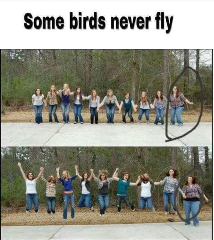 Fly bird fly - meme
