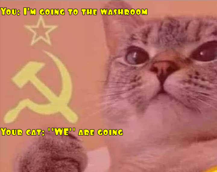 Socialist Kitty - meme