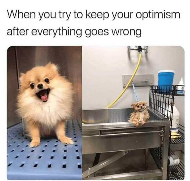 Just keep woofing - meme