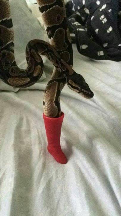Serpiente sexy buscar -_- - meme