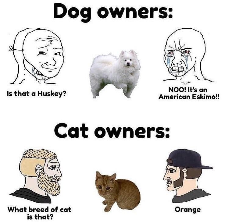 Dogs>cats - meme
