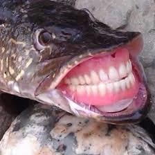 i love these kind of fish they make me smile for some reason - meme