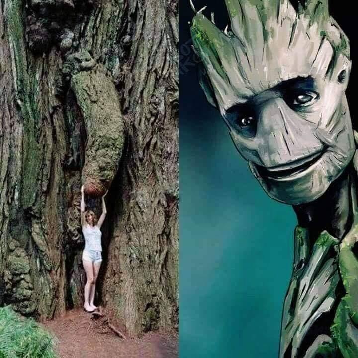 Je s'appelle Groot... - meme