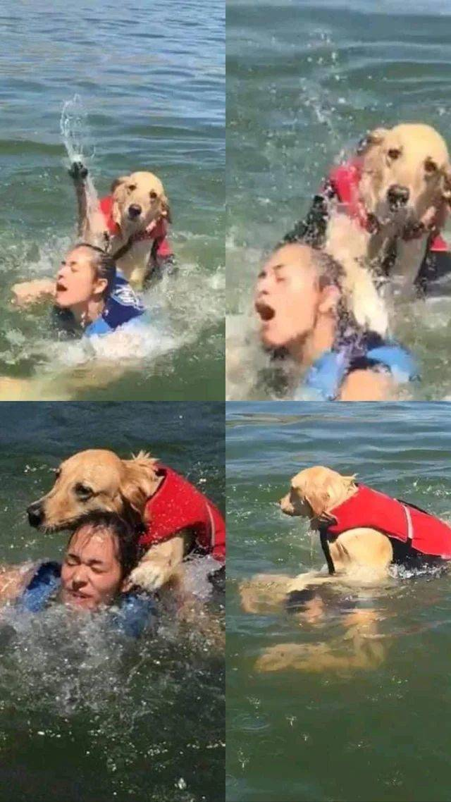 """Dog saves atheist's soul by emergency baptism."" - meme"