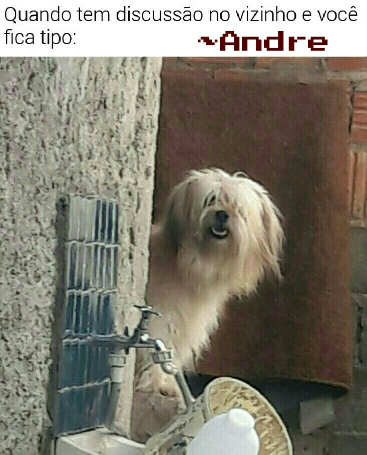Dogue - meme