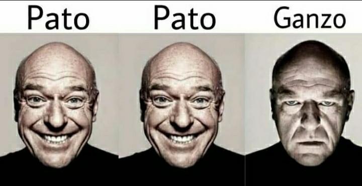 Pato pato ganzo - meme