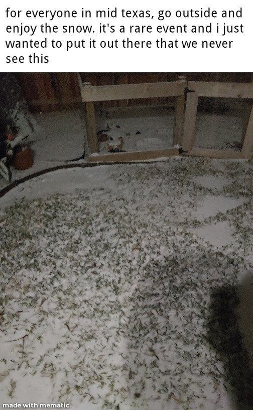 Pic of my backyard - meme