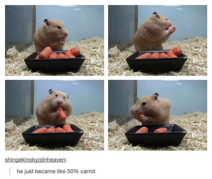 Cheek pouches can make a hamster's head, when full, double or even triple in size - meme