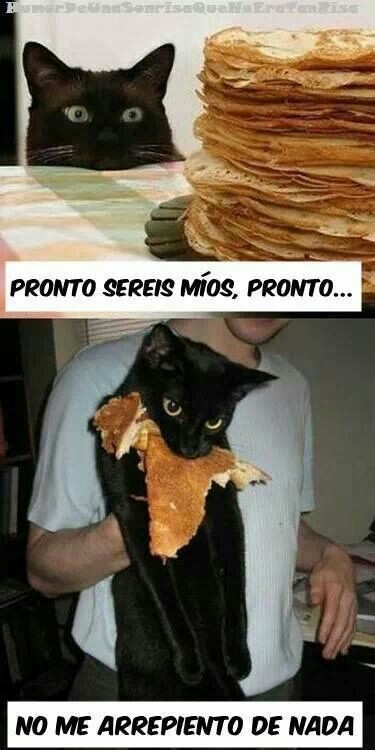 Cat win - meme