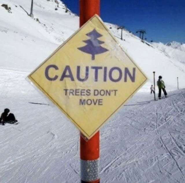 Caution, trees don't move - meme