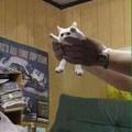 unlong cat