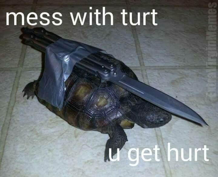 Turt - meme