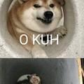 Enquanto isso no vaso kkk