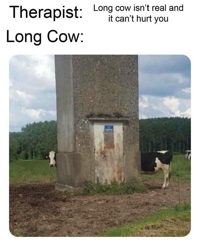 Long cow - meme