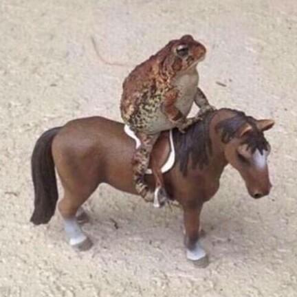 Ai gona tei mi horse tu de oul tal rould - meme