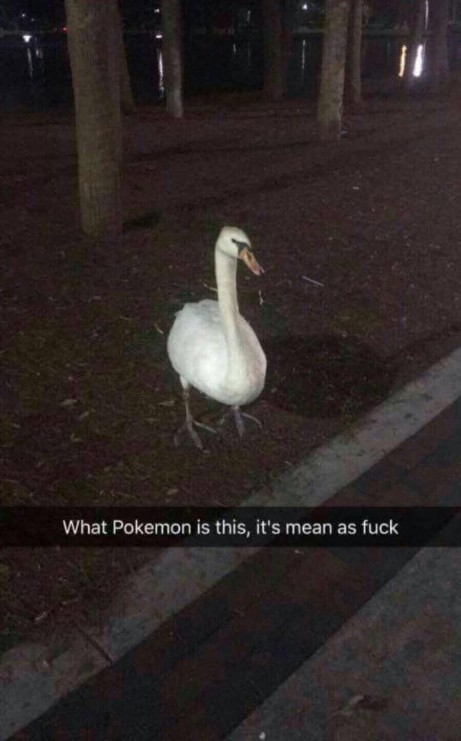 i caught it - meme