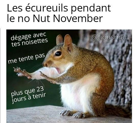 Littéralement le Non Noix Novembre - meme