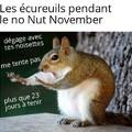 Littéralement le Non Noix Novembre