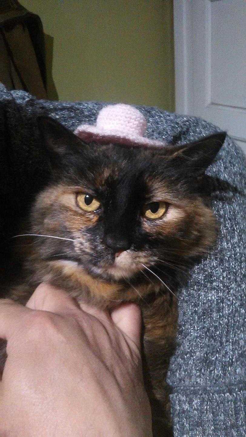 Sólo una gata con sombrero, disfruten - meme
