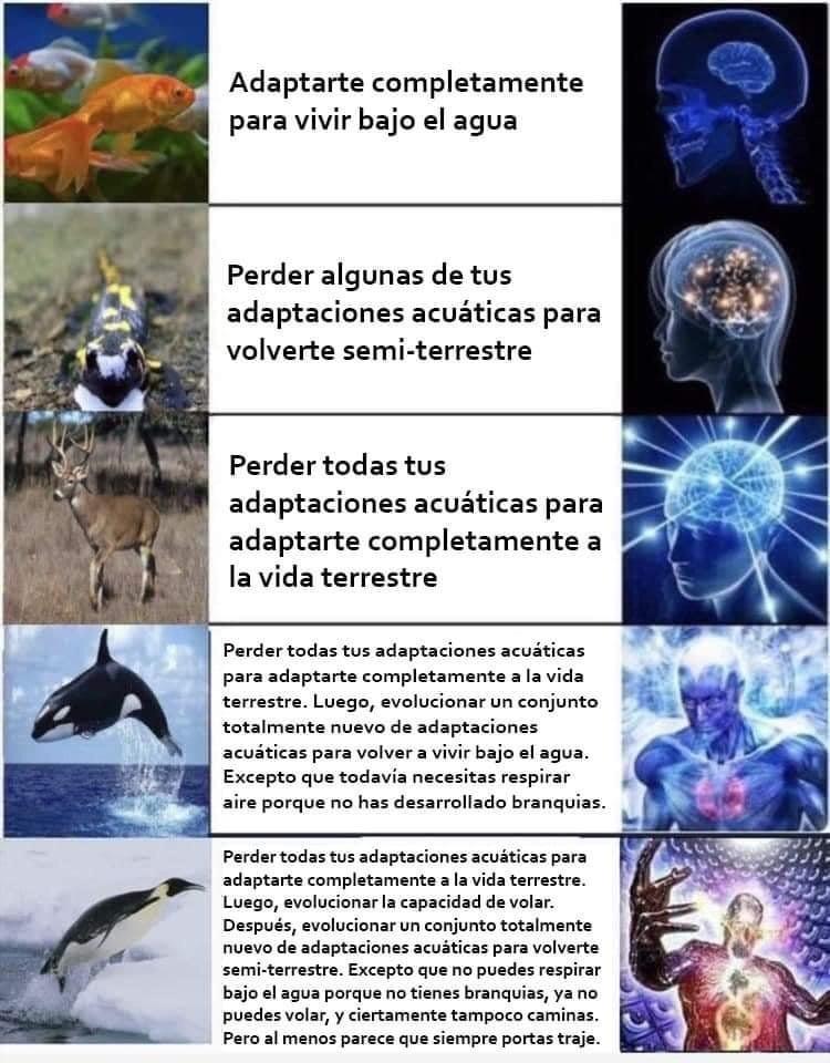evoluciones vergas - meme