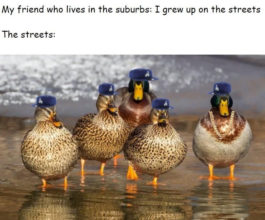 Once again a google doc meme, and ducks...