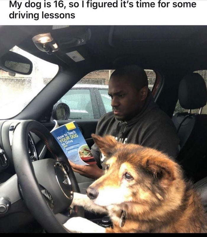 Who needs self driving cars when you have doggo? - meme