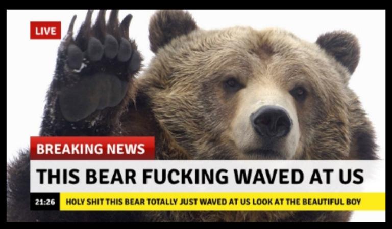 Bear yes wow - meme