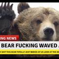 Bear yes wow