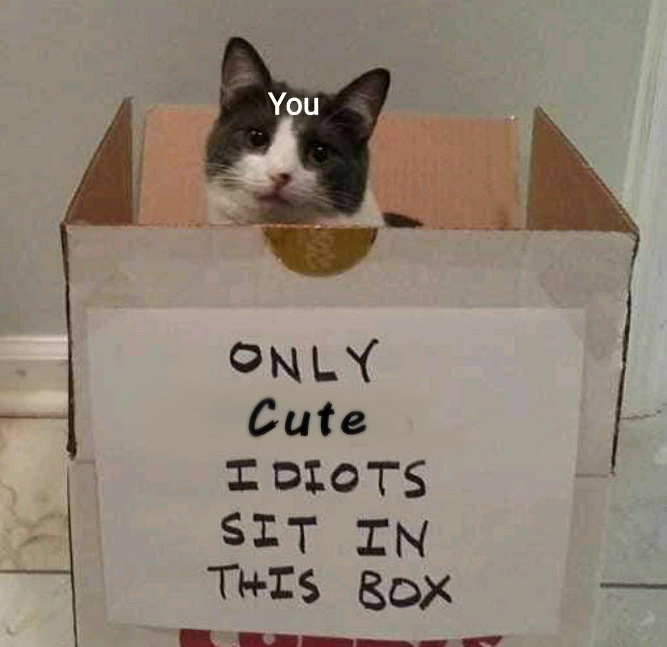 Ur cute and you should be cute - meme
