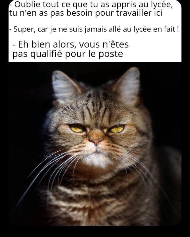 C'est un chat sur le meme.