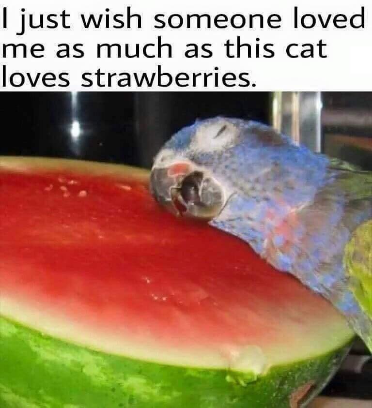 kitteh loves strawberrys - meme