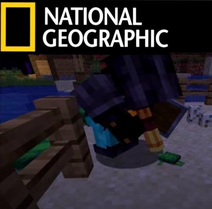 National Geographic be like - meme