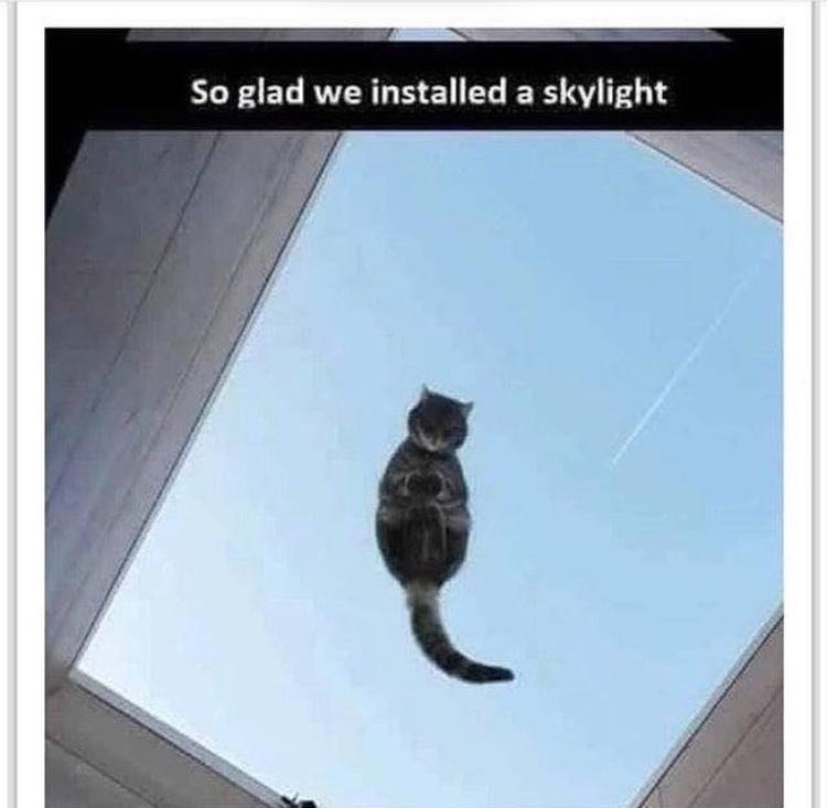 levitating cat - meme