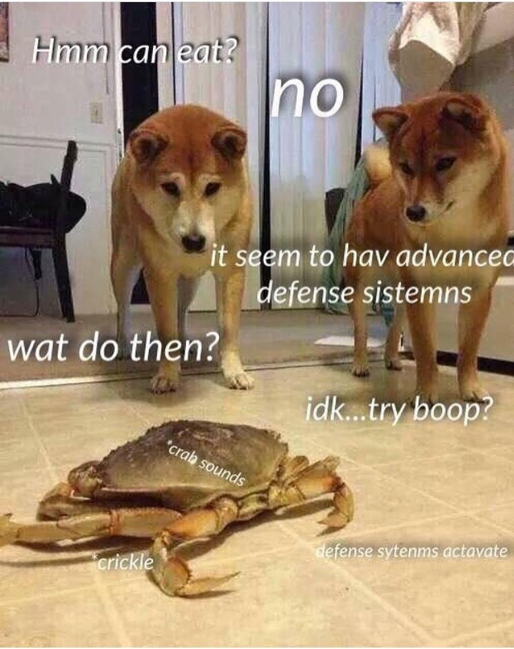 Do a boop - meme