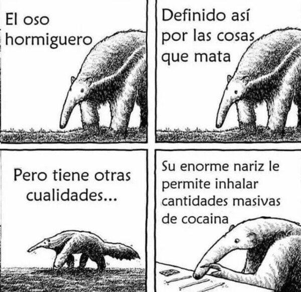 When es el oso colombiano - meme