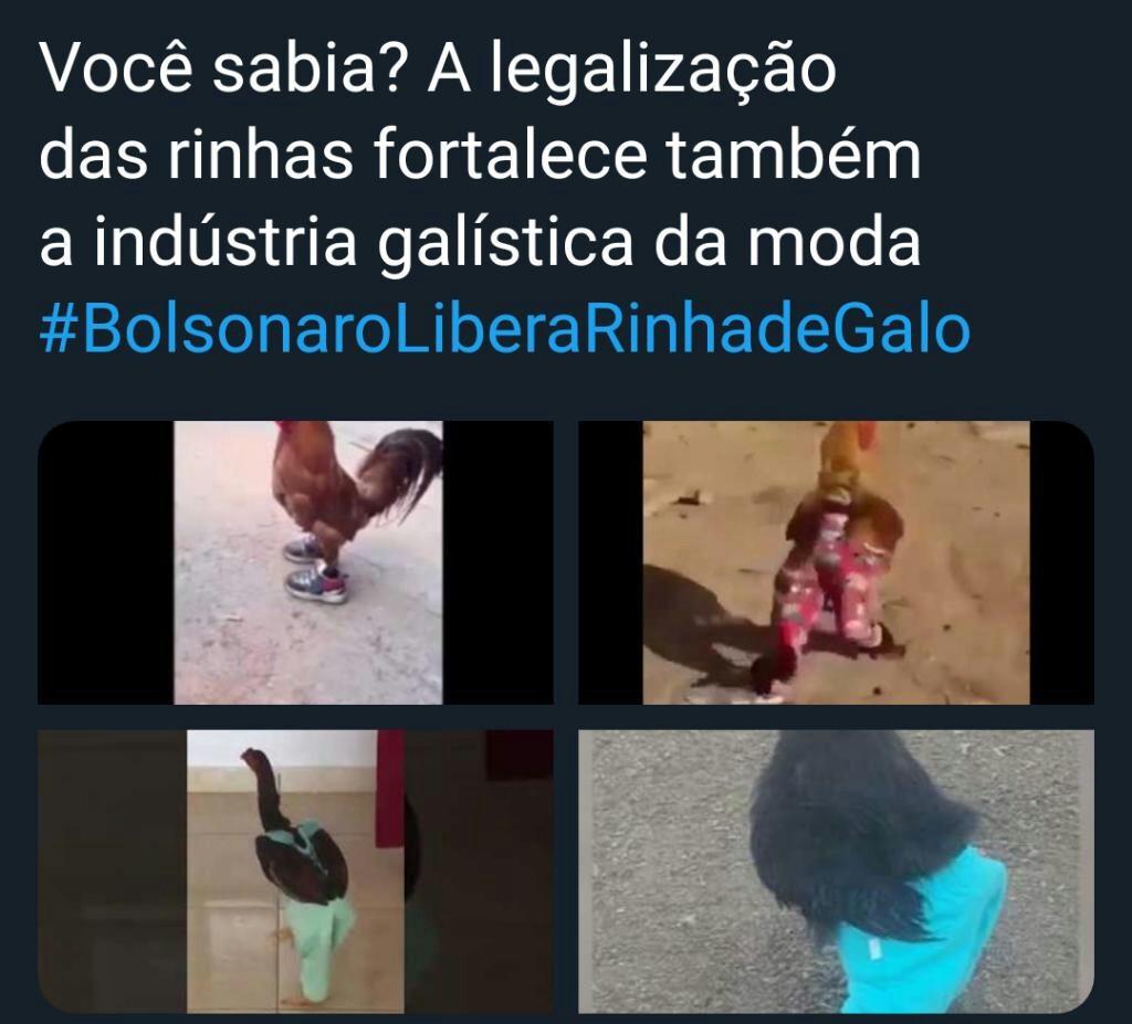 #BolsonaroLiberaRinhadeGalo - meme