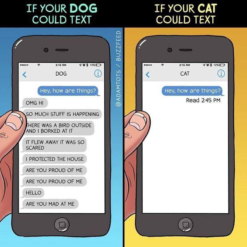 I love doggo's - meme