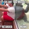 Real monke hours
